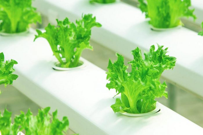 Automated Farm-In-A-Box Is A Solution For Urban Food Deserts