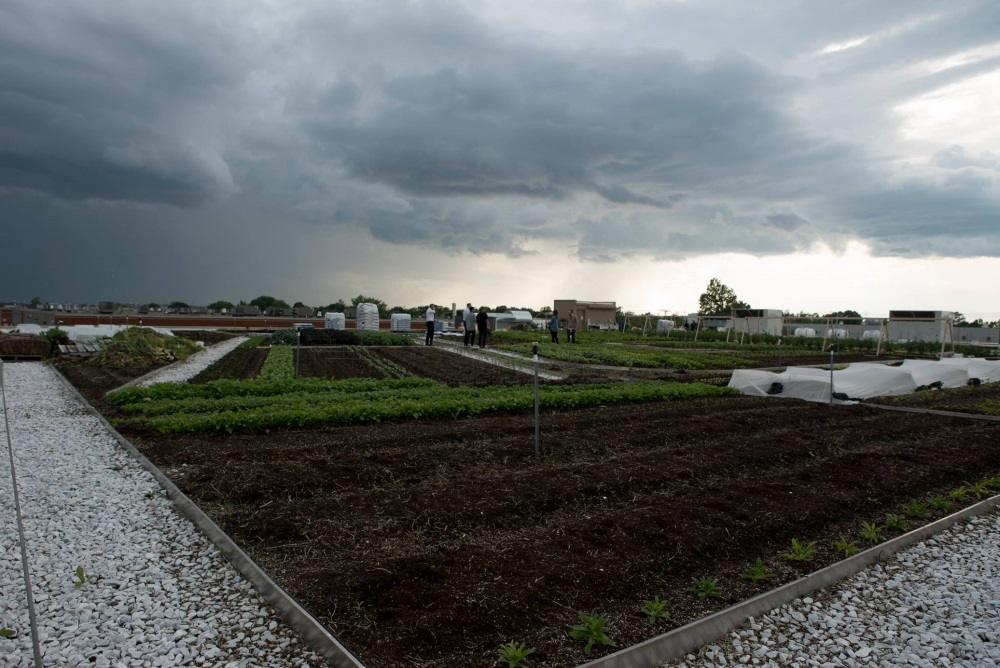 Green_Roof_Grows_Over_30_Different_Vegetables_With_8_Beehives.jpg